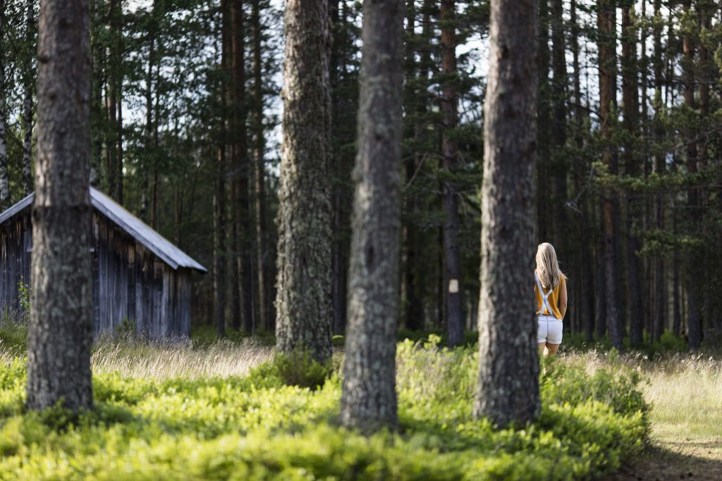 The woods in Gjerstad