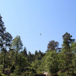 Vi har testet ut den nye klatreparken i Kristiansand, perfekt forutfoldelse og mestring ute i naturen. Foto: Inger Hutchinson©Visit Sørlandet