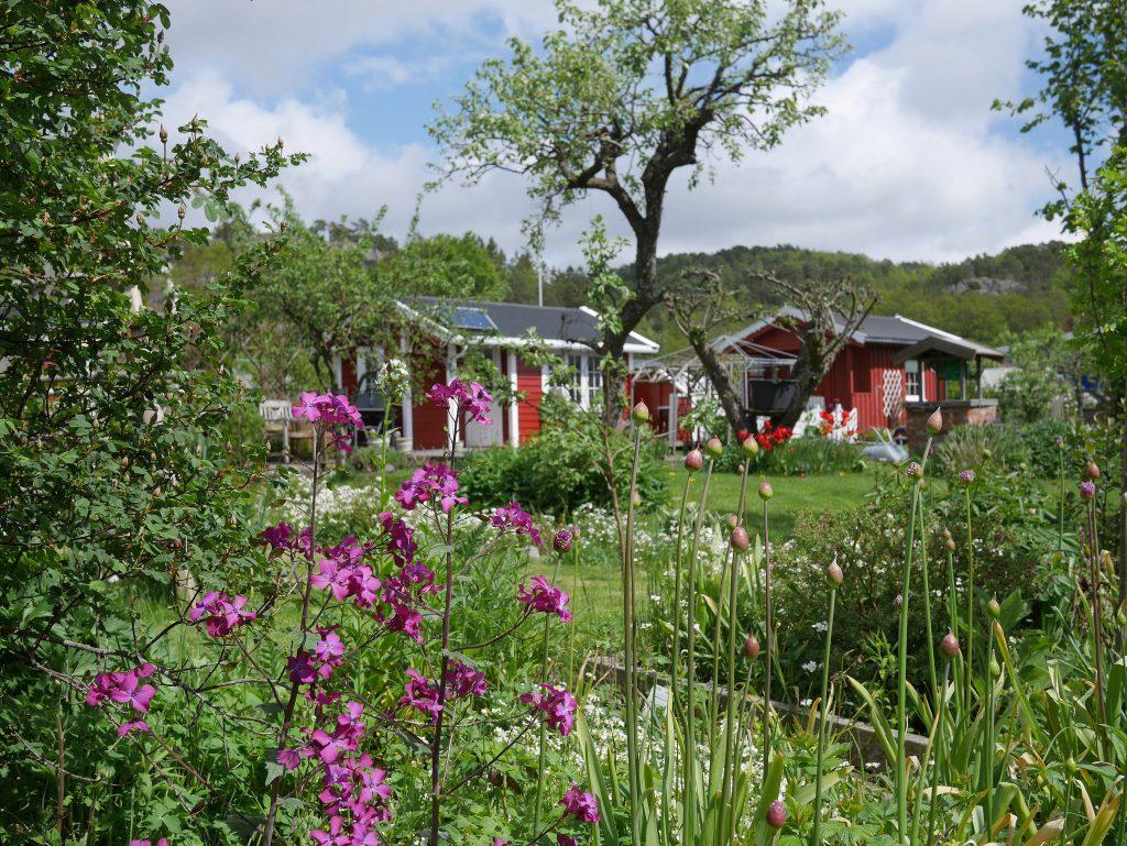 Blomster, vafler og koselige hager i Kolonihagen