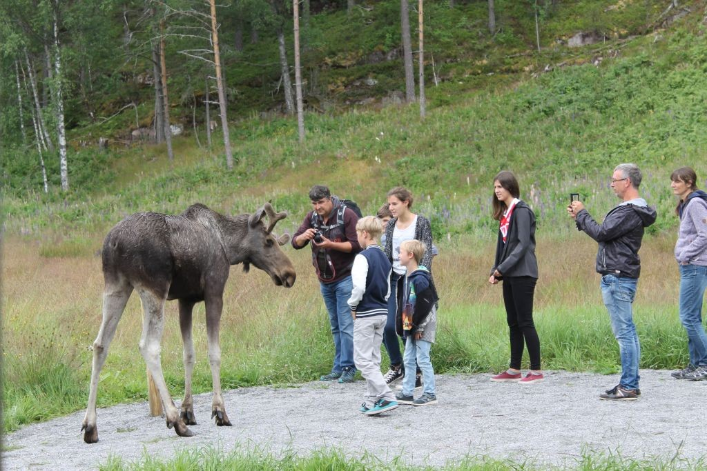 The family visiting Elgtun elk park in Setesdal. Photo: Susanne Hegenscheidt.